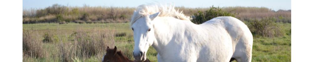 Matériel chevaux